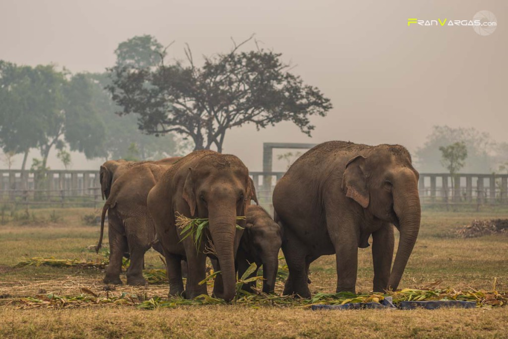 Elephant Nature Park by Fran Vargas Photography
