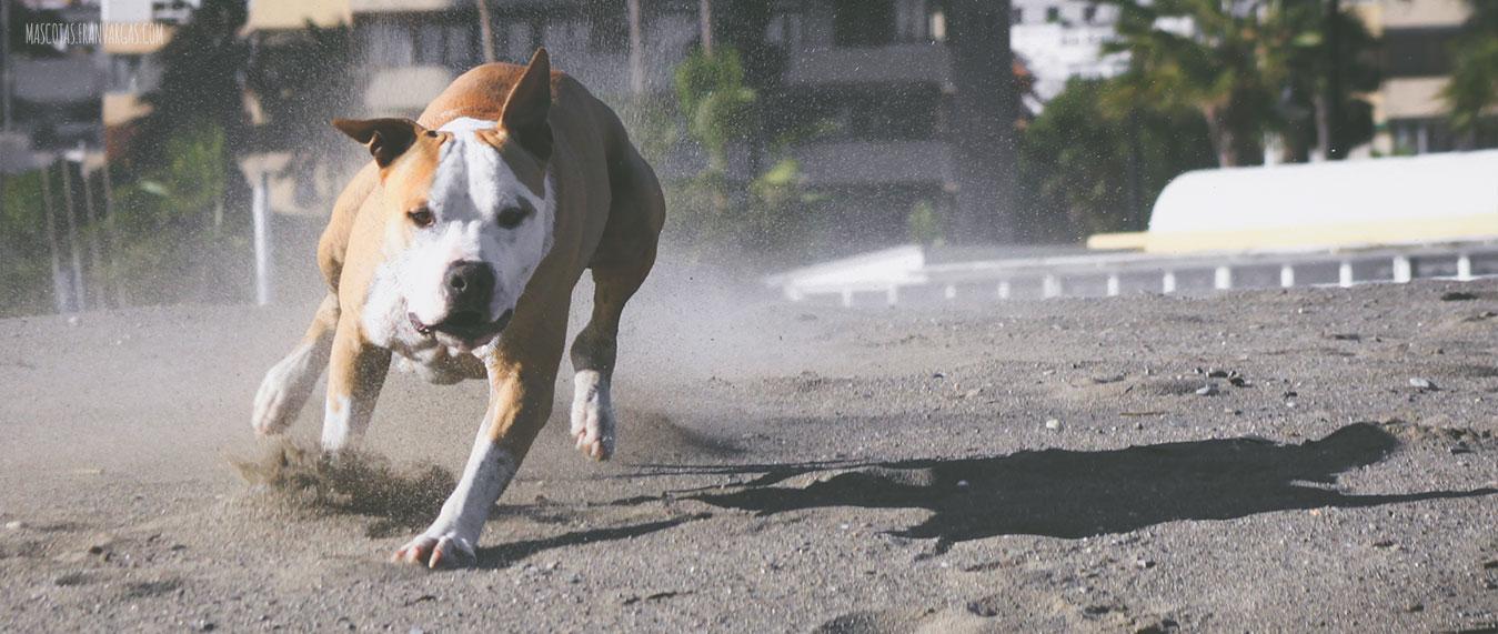 Fotografo de mascotas en malaga