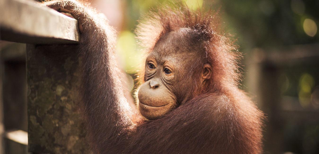 Borneo-Slider,-Fran-Vargas-Photography