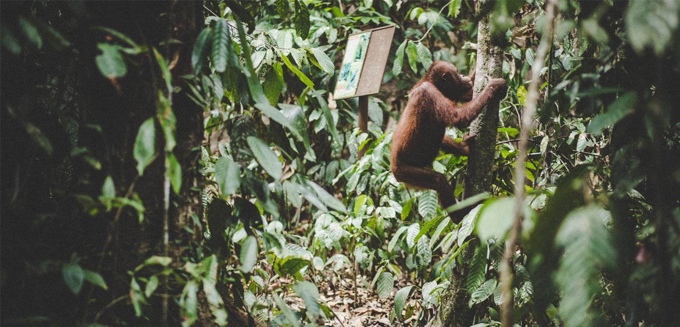 Borneo.-Fran-Vargas-photography