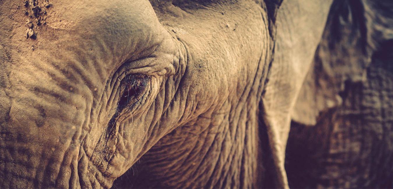 Elefante-.-Fran-Vargas-photography