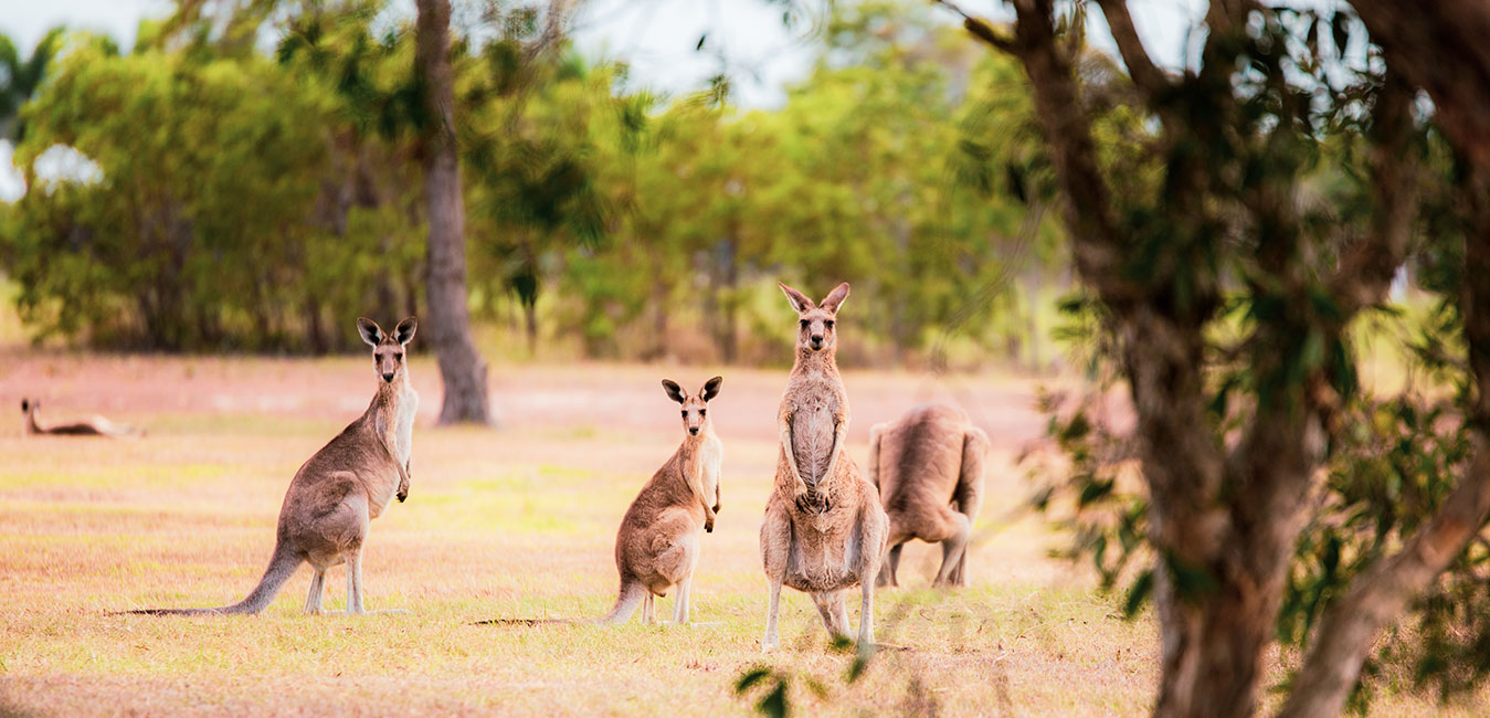 Kangaroo,-Australia.-Fran-Vargas-photography